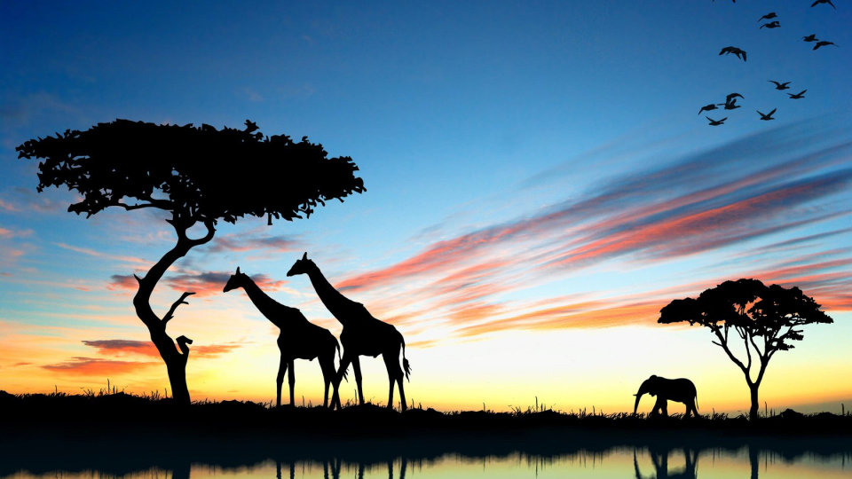 Savana Senegal